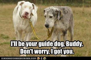 I'll be your guide dog, Buddy. Don't worry, I got you.