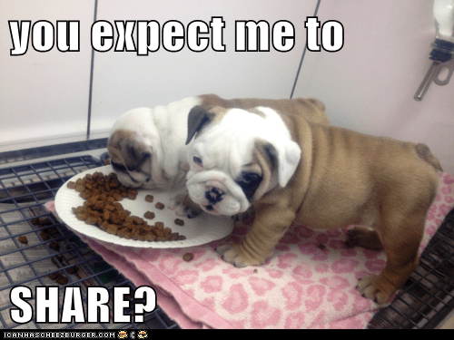 food,pug,puppy,share