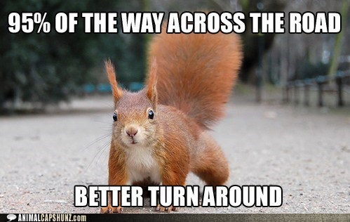 cars crossing the road logic roadkill squirrel turn around - 6045820416