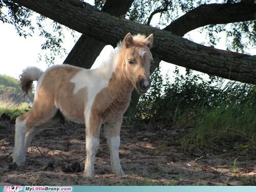 april fools my little pony ponies shetland pony - 6045904128
