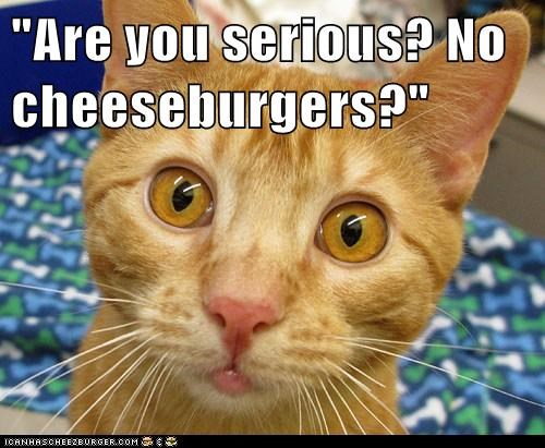Cheezburger Image 6045936896