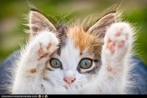 cute,cyoot kitteh of teh day,feets,hands up,paws,paws up