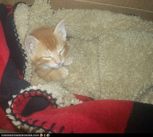 blankets,cyoot kitteh of teh day,human-like,sleep,sleeping,tucked in