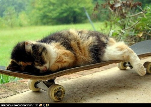 asleep,cyoot kitteh of teh day,skateboard,skateboards,sleeping
