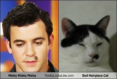 actor cat celeb fred savage funny - 6046347776