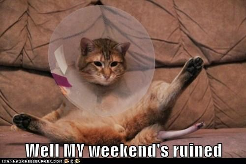 accident,cone of shame,Hall of Fame,ruined,weekend,well