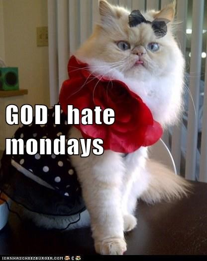 cat,derp,garfield,mondays