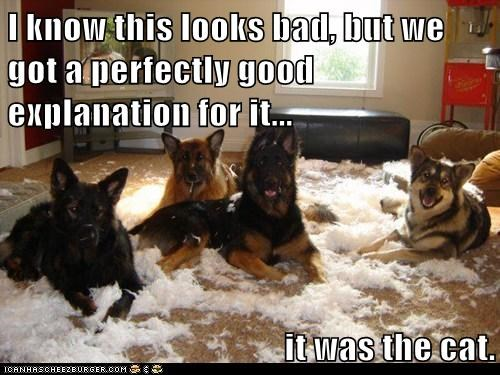 best of the week blame Cats destruction dogs feathers Hall of Fame it was the cat messes pillows - 6047717120