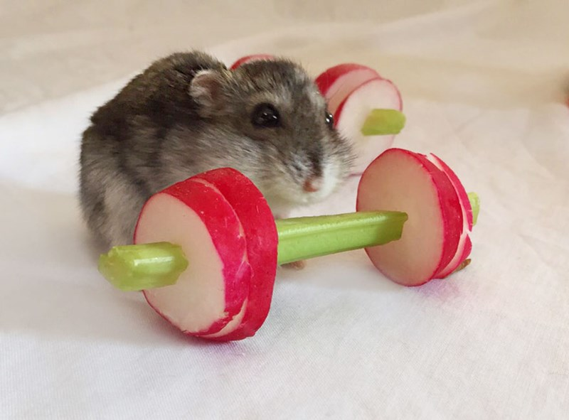 aww gym tiny cute hamsters excercise - 6048005