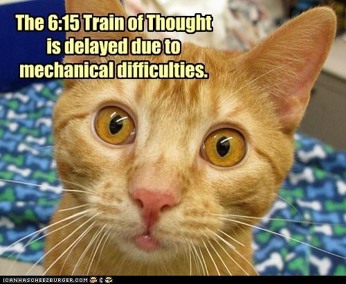 brain cat dumb Hall of Fame lolcat slow stupid train - 6048631040