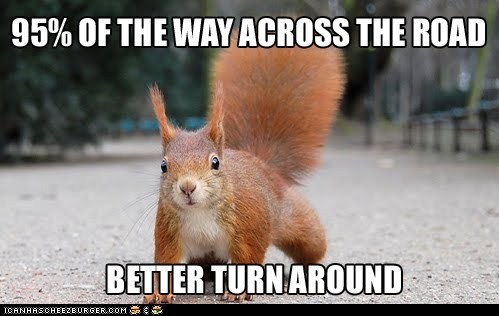 caption,dumb,logic,squirrel,squirrels,street