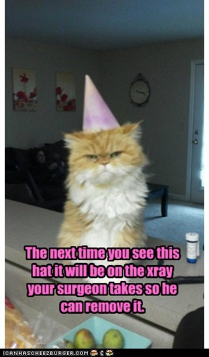 cat,evil,fury,hat,hate,lolcat,mad