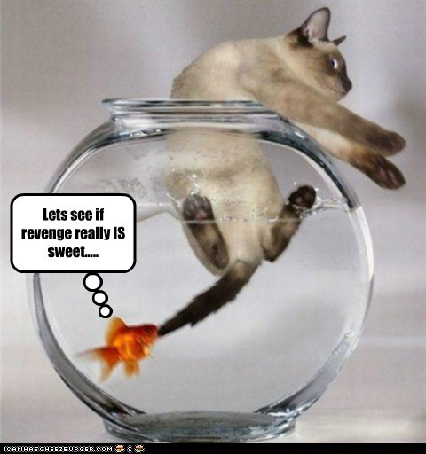 cat fall goldfish grab pulling revenge sweet water - 6048996608