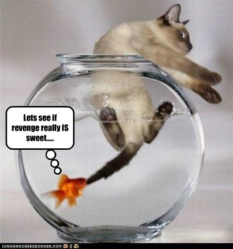 cat fall goldfish grab pulling revenge sweet water - 6048996608