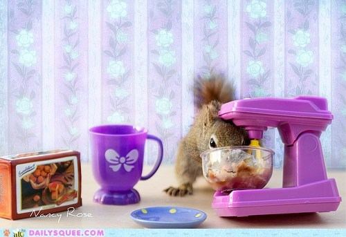 cookie dough,cooking,mixer,squee,squirrel,squirrels,toys