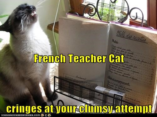 bad cat FAIL french language lolcat teach teacher