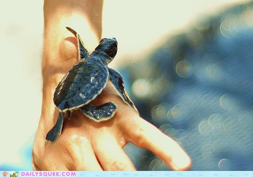 baby climb hand hands sea turtles squee tiny turtle water