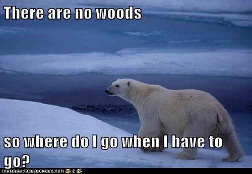 confused,idiom,polar bear,where,woods