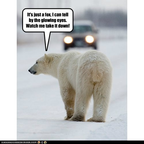 car eyesight fox mistake polar bear Watch This - 6050283776