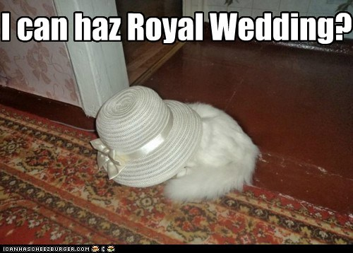 big,cat,face,hat,lady,lolcat,royal,royal wedding,silly,too big