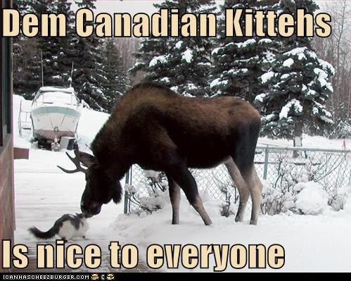 canadian,Cats,classics,friendly,greeting,moose,nice,polite