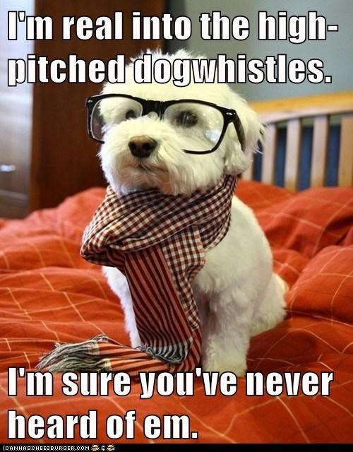 dogs,glasses,hipster,maltese,scarf