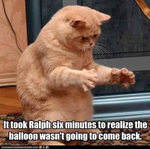 balloon Balloons cat Cats dumb explode Hall of Fame idiot lolcat pop slow