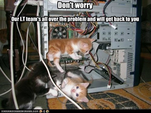 cat Cats computer fix Hall of Fame internet it kitten lolcat repair technicians trouble - 6051499520