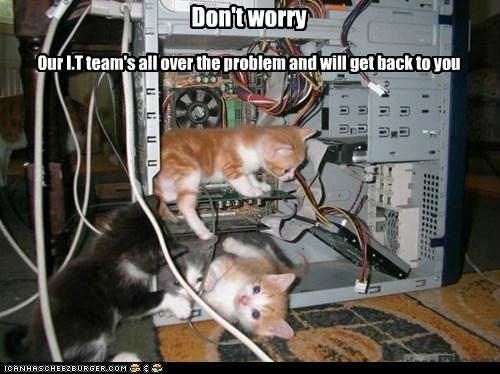 cat Cats computer fix Hall of Fame internet it kitten lolcat repair technicians trouble - 6051499520
