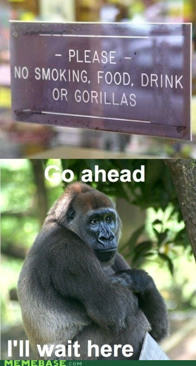 animals gorillas Memes sad times wait - 6051663104