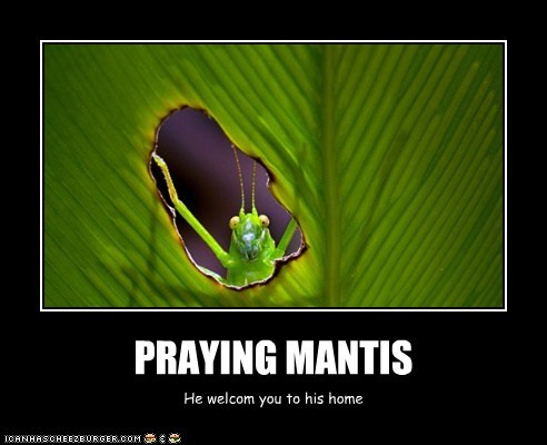 PRAYING MANTIS He welcom you to his home