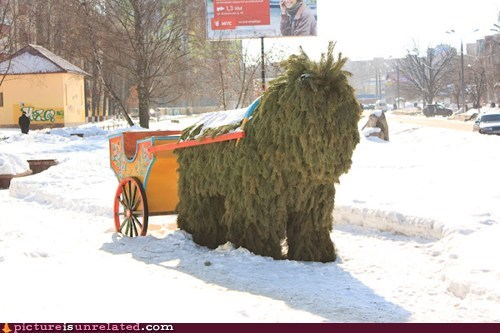 carriage horse pine snow wtf