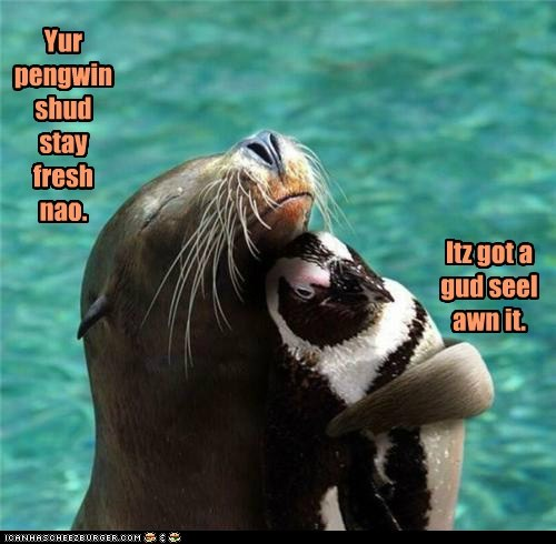 annoyed fresh good hug penguin puns seal wordplay - 6052791552