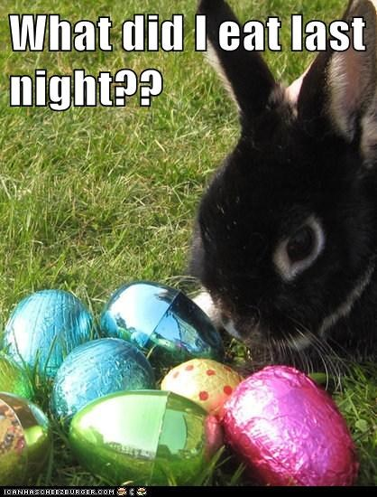 Bunday,bunnies,bunny,candy,chocolate,confusion,drunk,easter,easter eggs,eat,eggs,hungover,what