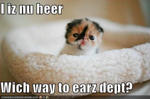 ears kitten lolcats lolkittehs - 605351680