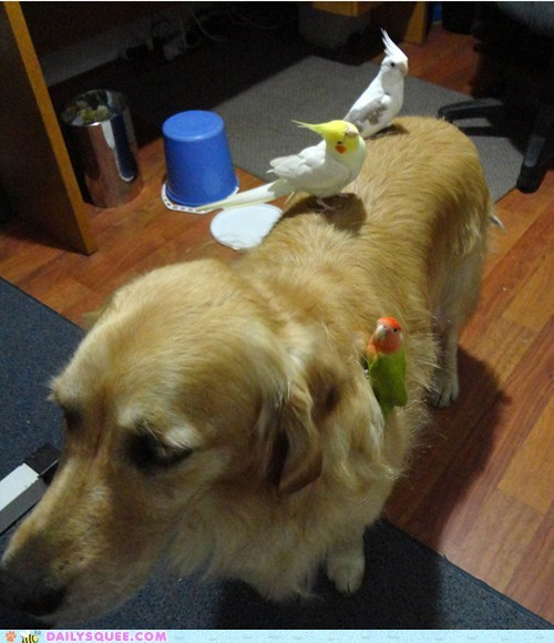 birds dogs friends parakeets pets reader squees ride - 6054374912