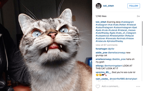 loki cat vampire instagram