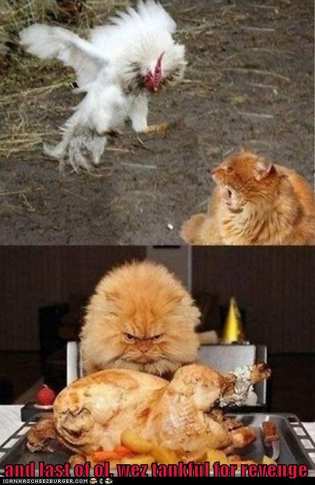 cat chicken eat food kill lolcat nom pray revenge - 6054727680