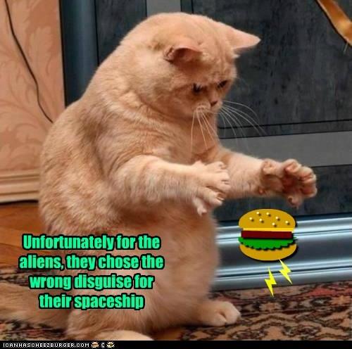 Cheezburger Image 6055139072