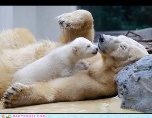 baby,KISS,mom,polar bears,sleep