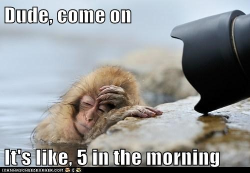 annoyed dude early japanese macaque monkey photographer seriously tired