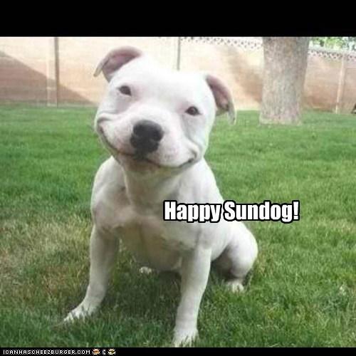 best of the week dogs Hall of Fame pitbull smile Sundog - 6055307008