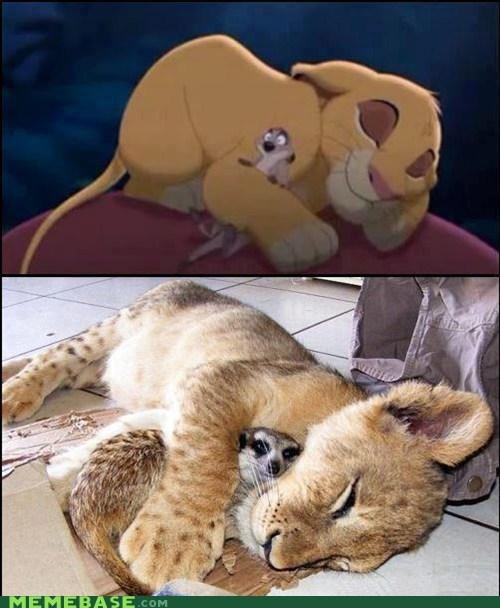 childhood IRL lion king simba The Internet IRL timon - 6055548416