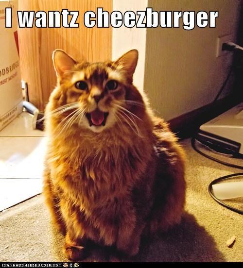 Cheezburger Image 6055598848