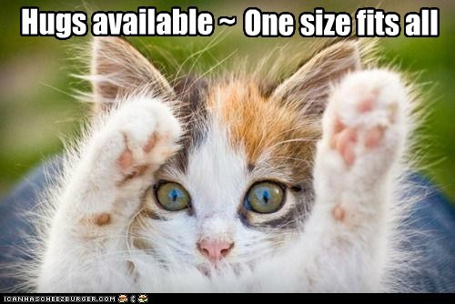 cat friend Hall of Fame hug lolcat love sell - 6056253440