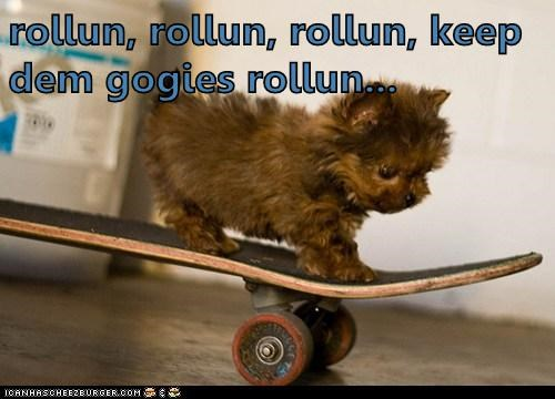 puppy,skateboard