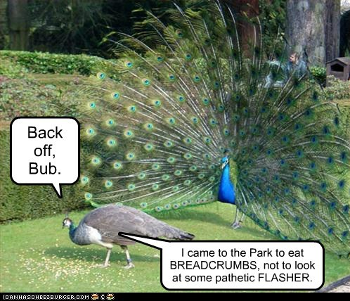 back off,breadcrumbs,flasher,harrassment,indecent,peacocks,unimpressed