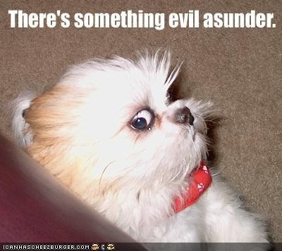 evil scared shihtzu