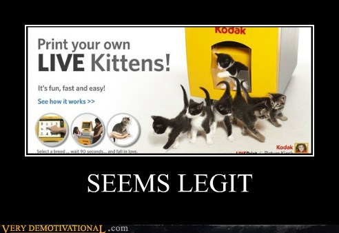 cat hilarious kitten live print - 6057167104