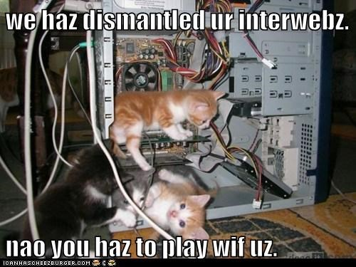 break Cats computer computers destroy distraction Hall of Fame internet kitten play playing technology - 6057389312